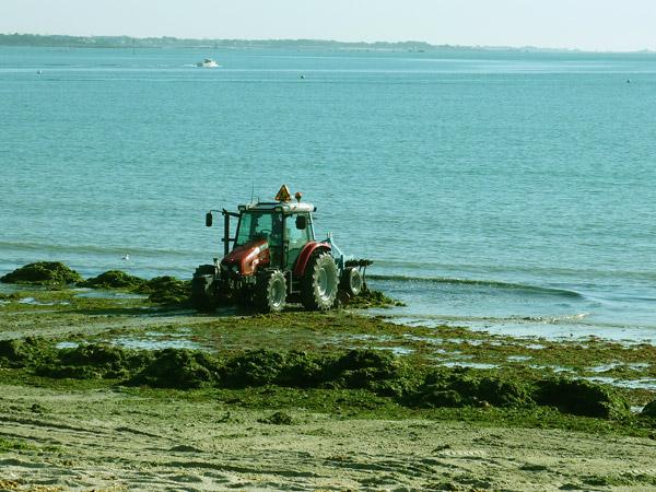 Cap Coz le 9 11 2009 : la solution fouesnantaise par le rejet des algues vertes à la mer !