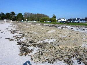 Le Cabellou algues vertes pourries le 9 avril 2010