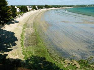 Algues vertes le Cap Coz le 4 Mai 2010