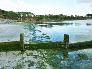 Algues vertes Kerleven le 3 Mai 2010