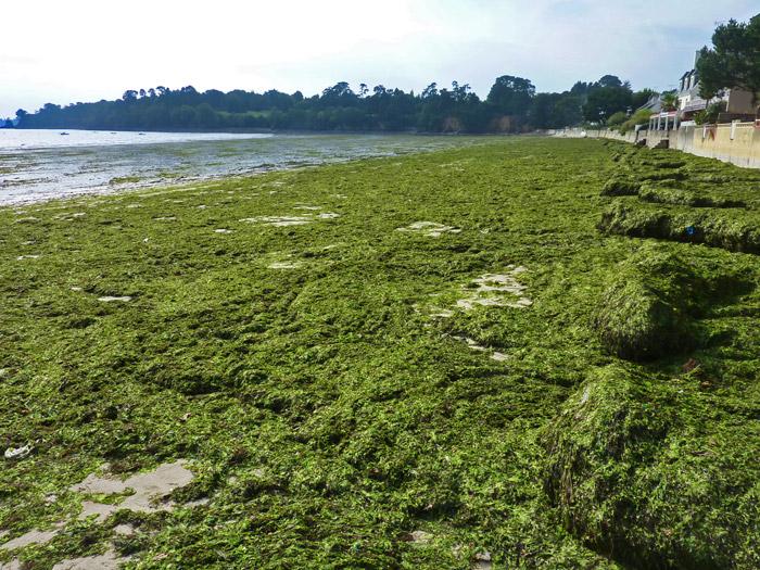 Symphonie De Couleurs De Nos Algues …Pas Toutes Vertes
