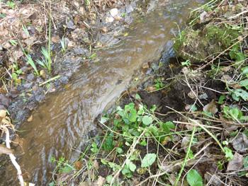 Le ruisseau de Ste Anne dégagé retrouve son  lit et son apparence