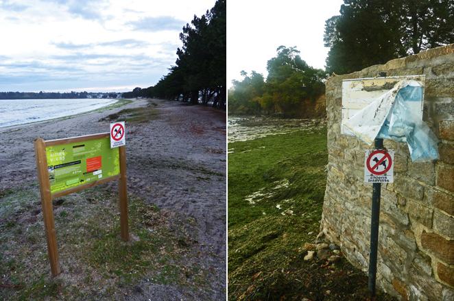 Chiens et algues vertes interdits ?