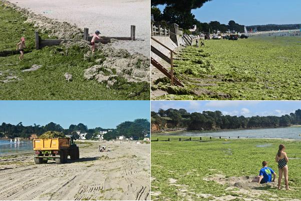 La plage avec les algues vertes et les camions
