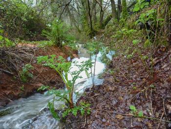Photo 10 : Le ruisseau « mousseux » de Kérambris dévale vers le captage de Penalenn, pour l'alimentation en « eau potable » de la population fouesnantaise !