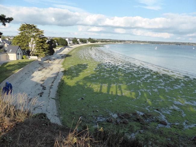 Photo 12 : Cap Coz en octobre 2013, vous avez dit une année sans algues vertes ?