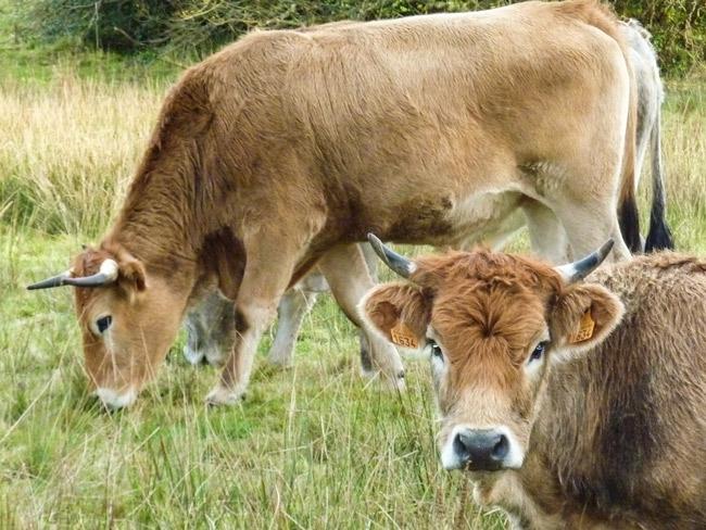 Photo 17 : tempête ou pas, nous, on préfère rester à Fouesnant, Mousterlin et Bréhoulou plutôt que d'aller dans une ferme-usine de 1000 vaches !