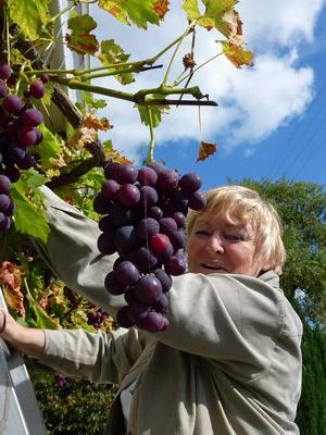 """La Présidente de l'ASPF : """" nous aussi, on pense s'y mettre, on a déjà la vigne..."""""""