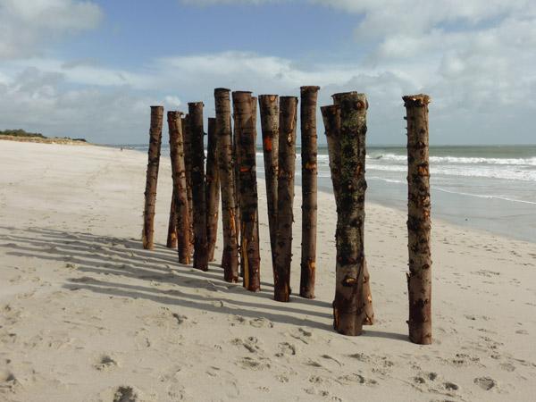 A quand l'élagage des châtaigniers, plage de Cleut-Rouz ? la mer s'en chargera peut-être ...