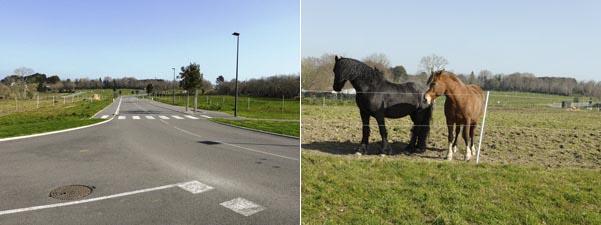 Les chevaux : pour la lumière la nuit, nous,  on n'avait rien demandé.