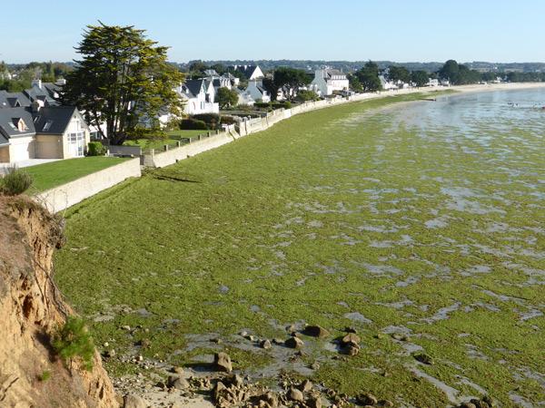fin septembre 2015, comme d'hab, les algues vertes sont au rendez-vous malgré leurs beaux discours