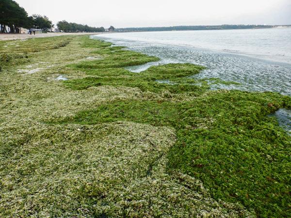 Cap Coz en vert comme d'hab en septembre et octobre 2016.