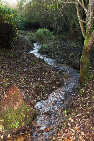 Le même ruisseau après nettoyage